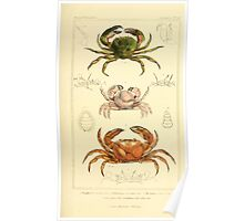 The Animal Kingdom by Georges Cuvier, PA Latreille, and Henry McMurtrie 1834  309 - Crustacea Crustaeans Poster