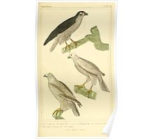 The Animal Kingdom by Georges Cuvier, PA Latreille, and Henry McMurtrie 1834 643 - Aves Avians Birds Poster