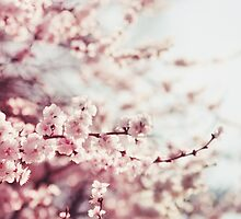 Spring Cherry blossoms, pink flowers. by msOctopus