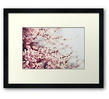 Spring Cherry blossoms, pink flowers. Framed Print