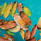 Leaf Party by Steve E