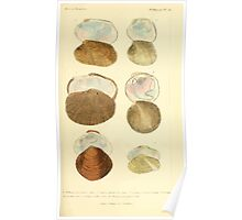 The Animal Kingdom by Georges Cuvier, PA Latreille, and Henry McMurtrie 1834  273 - Mollusca Mollusks Poster