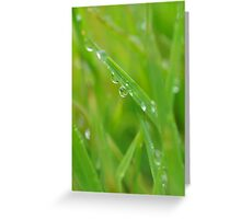 Close attention to life on the edge Greeting Card