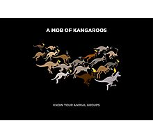 A Mob of Kangaroos Photographic Print