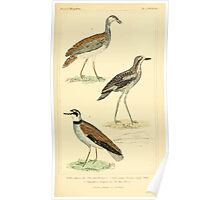 The Animal Kingdom by Georges Cuvier, PA Latreille, and Henry McMurtrie 1834 724 - Aves Avians Birds Poster