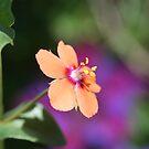 Scarlet Pimpernel by SKNickel