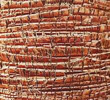 Palm tree bark texture by msOctopus