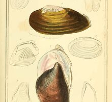 The Animal Kingdom by Georges Cuvier, PA Latreille, and Henry McMurtrie 1834  269 - Mollusca Mollusks by wetdryvac