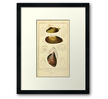 The Animal Kingdom by Georges Cuvier, PA Latreille, and Henry McMurtrie 1834  269 - Mollusca Mollusks Framed Print