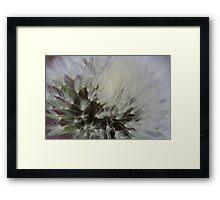 Misty Dandelion Framed Print