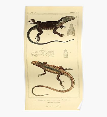 The Animal Kingdom by Georges Cuvier, PA Latreille, and Henry McMurtrie 1834  011 - Reptilia Reptiles Poster