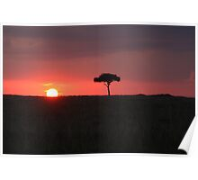 Savannah Sunset Poster