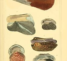 The Animal Kingdom by Georges Cuvier, PA Latreille, and Henry McMurtrie 1834  268 - Mollusca Mollusks by wetdryvac