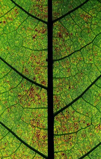 Green highway's road leaves by Etienne RUGGERI Artwork