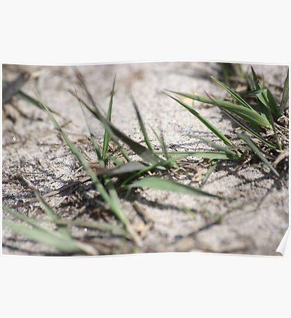Dune grass Poster