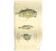 The Animal Kingdom by Georges Cuvier, PA Latreille, and Henry McMurtrie 1834  097 - Pisces Fish Poster