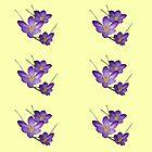 Spring Crocus by Gilberte