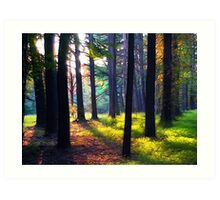 """""""Cathedral In The Woods"""" Art Print"""