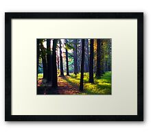 """Cathedral In The Woods"" Framed Print"