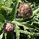 Artichokes ready for eating! by DeborahDinah
