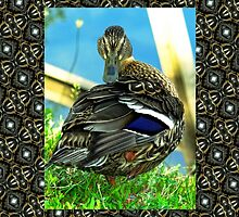 Im ready for my close up Mr Duckville! by Beth BRIGHTMAN