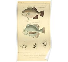 The Animal Kingdom by Georges Cuvier, PA Latreille, and Henry McMurtrie 1834  131 - Pisces Fish Poster