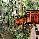 Fushimi Inari, Japan 2008 by NatashamenoN PhotographY