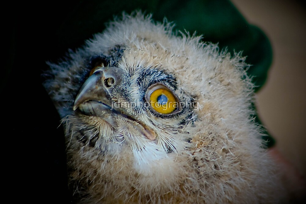Baby Owl 2 ( one of four ) by jdmphotography