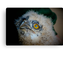 Baby Owl 2 ( one of four ) Canvas Print