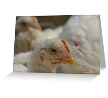 Goofy Adolescent Chick Greeting Card