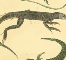 The Animal Kingdom by Georges Cuvier, PA Latreille, and Henry McMurtrie 1834  015 - Reptilia Reptiles Sticker