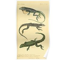 The Animal Kingdom by Georges Cuvier, PA Latreille, and Henry McMurtrie 1834  015 - Reptilia Reptiles Poster