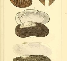 The Animal Kingdom by Georges Cuvier, PA Latreille, and Henry McMurtrie 1834  274 - Mollusca Mollusks by wetdryvac