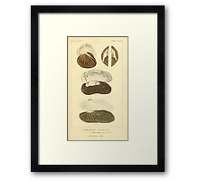 The Animal Kingdom by Georges Cuvier, PA Latreille, and Henry McMurtrie 1834  274 - Mollusca Mollusks Framed Print
