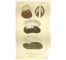 The Animal Kingdom by Georges Cuvier, PA Latreille, and Henry McMurtrie 1834  274 - Mollusca Mollusks Poster