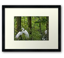 Picking a Location Framed Print