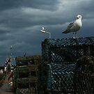 Seagull by bobubble