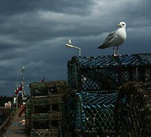 Seagull by bobubble