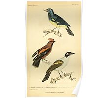 The Animal Kingdom by Georges Cuvier, PA Latreille, and Henry McMurtrie 1834 664 - Aves Avians Birds Poster