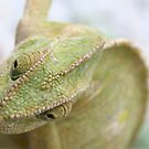 Chameleon Head Close Up by taiche