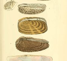 The Animal Kingdom by Georges Cuvier, PA Latreille, and Henry McMurtrie 1834  279 - Mollusca Mollusks by wetdryvac
