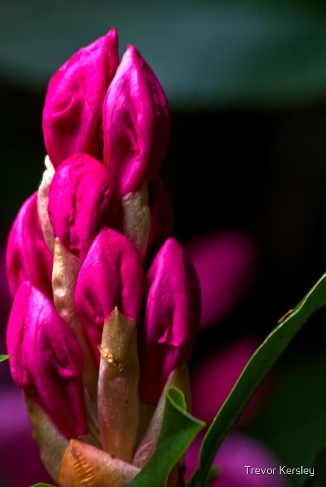 Purple by Trevor Kersley