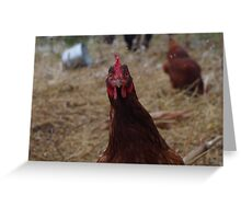 Surprised Chicken! Greeting Card