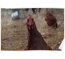 Surprised Chicken! Poster