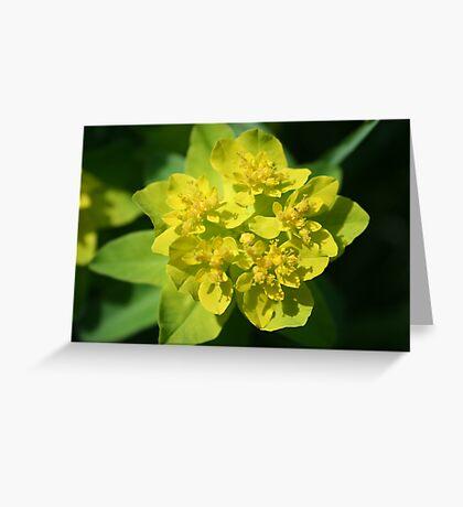 Cushion Spurge Greeting Card