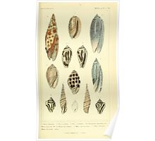 The Animal Kingdom by Georges Cuvier, PA Latreille, and Henry McMurtrie 1834  239 - Mollusca Mollusks Poster