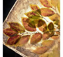 Leaves in the Ice #3 Photographic Print