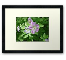 Courtesy of the mid-spring frost Framed Print