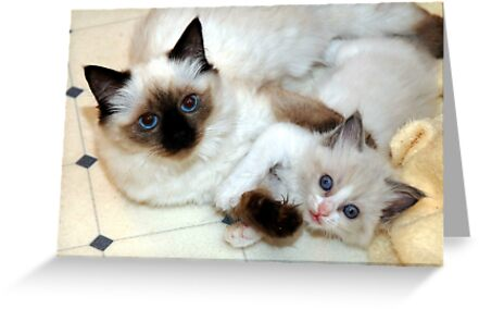 Ragdoll Mom and baby playing by Marjorie Wallace