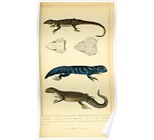 The Animal Kingdom by Georges Cuvier, PA Latreille, and Henry McMurtrie 1834  013 - Reptilia Reptiles Poster